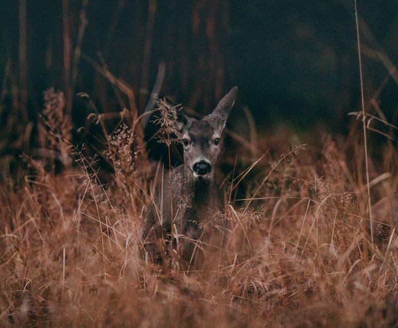 Finn ditt nye viltkamera i dag